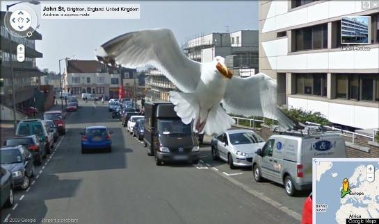 Seagull-thumb-545x323.jpg