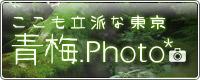 青梅.photo